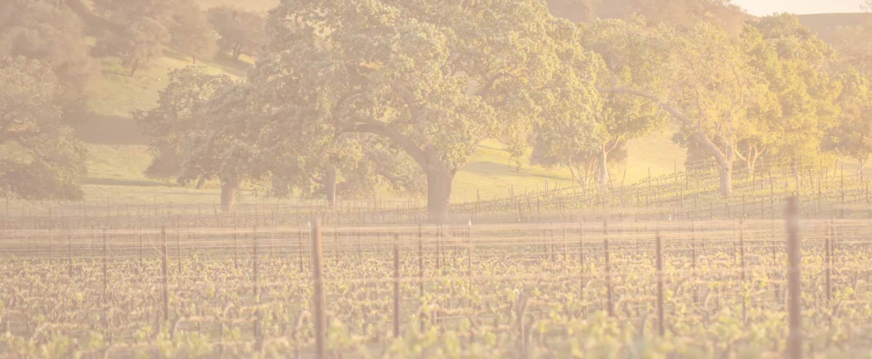 Tour Santa Barbara's Wine Country